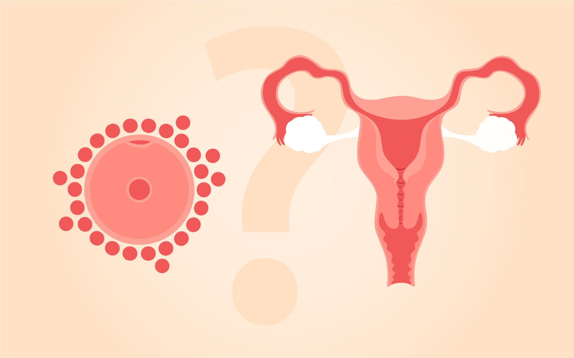Νεανικά Ωάρια σε σύγκριση με Νεανική Μήτρα: Τι είναι πιο σημαντικό για την επιτυχία της Εξωσωματικής Γονιμοποίησης;